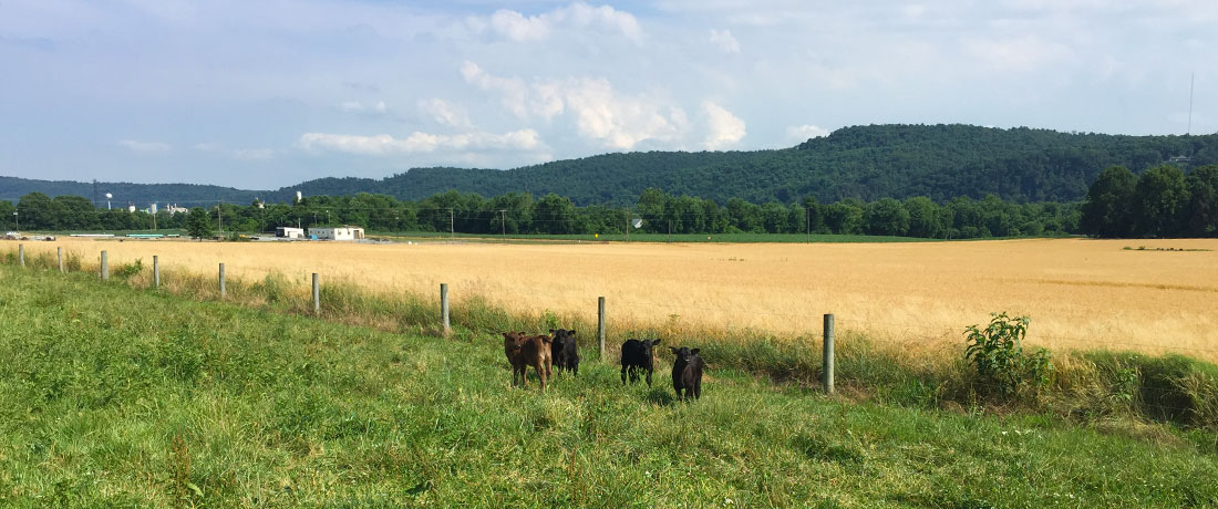 Grassfed Calves Slide | Drager Farms, Marietta PA